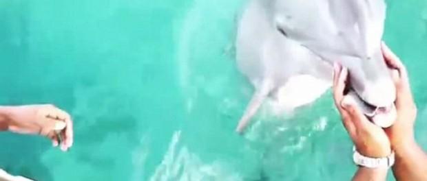 Δελφίνι «σώζει» κινητό τηλέφωνο στο βυθό της θάλασσας και το δίνει πίσω στην ιδιοκτήτριά του!