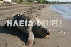 Κατάκολο: Περπατούσαν στην παραλία, όταν ξαφνικά είδαν ΑΥΤΌ! (PHOTOS)