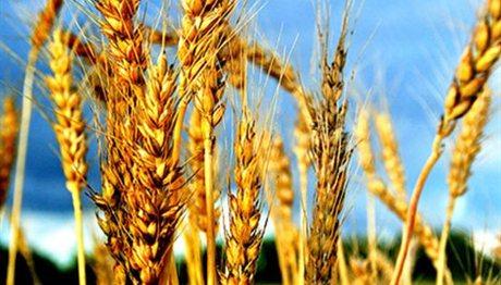 Πειραιώς: Νέες συνεργασίες συμβολαιακής γεωργίας και κτηνοτροφίας