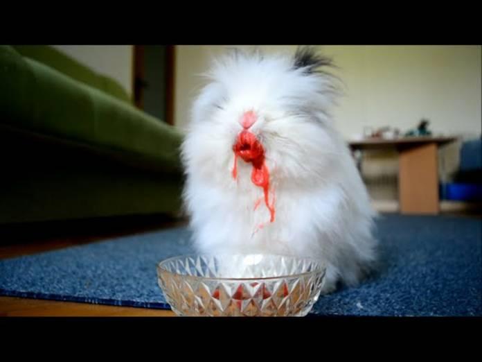 Αυτό είναι το πιο creepy κουνελάκι που υπάρχει! (video)