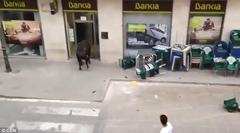 Ταύρος εισέβαλε μέσα σε… τράπεζα! (ΒΙΝΤΕΟ)