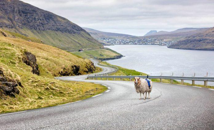 Νησιά Φερόε: Στα…  πρόβατα ανατέθηκε να μας ξεναγήσουν διαδικτυακά στη χώρα (video)