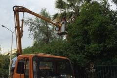 Θεσσαλονίκη: Κλάδεψαν τα δέντρα στο δήμο Παύλου Μελά (φωτο)
