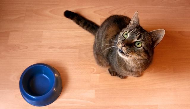 Ταλαιπωρείστε τη γάτα σας στο τάισμα – Θα είναι πιο υγιής και ευτυχισμένη (βίντεο)