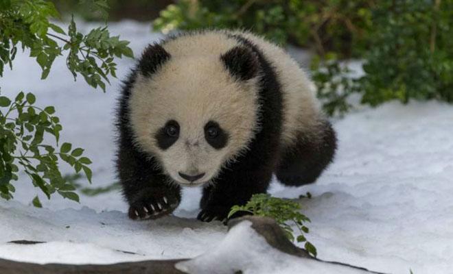 Κίνα: Νεαρό πάντα βλέπει χιόνι για πρώτη φορά και αντιδρά σαν μικρό παιδί [Βίντεο]