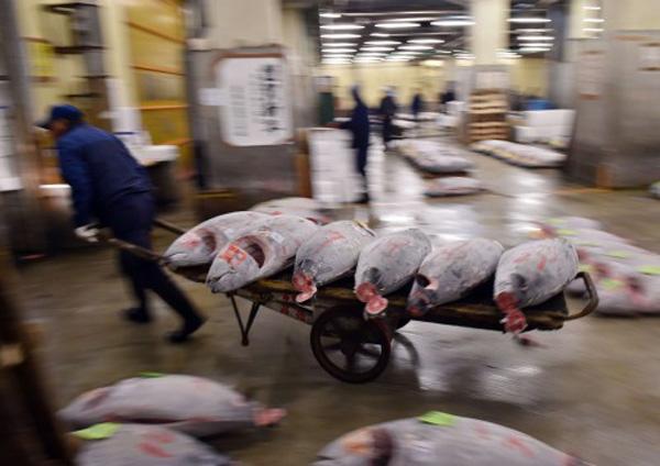 Το 2048 δεν θα υπάρχουν άλλα ψάρια για να τραφούμε
