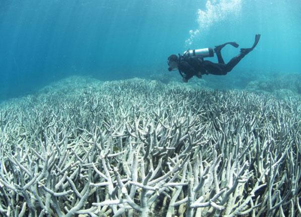 Εδώ και 65 χρόνια οι ωκεανοί γίνονται όλο και πιο θερμοί