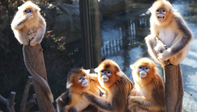 Δύο στα τρία είδη πιθήκων και μαϊμούδων απειλούνται με εξαφάνιση