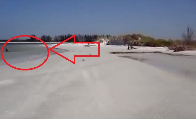 Νεκρή γοργόνα καταγράφεται από θαλάσσιο βιολόγο…Πανικός στο youtube με ΝΕΟ το βίντεο!