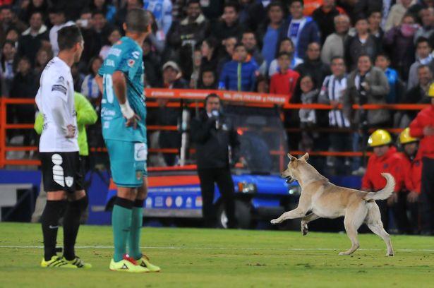 Ένας σκύλος και μια γάτα εισέβαλαν σε γήπεδο στο Μεξικό [vid]