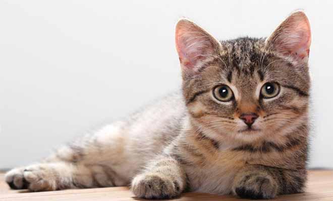 ΤΡΕΛΟ ΓΕΛΙΟ: Δείτε τη γάτα που βλέπει θρίλερ και έχει ΤΡΕΛΑΝΕΙ όλο το Ίντερνετ! [Βίντεο]