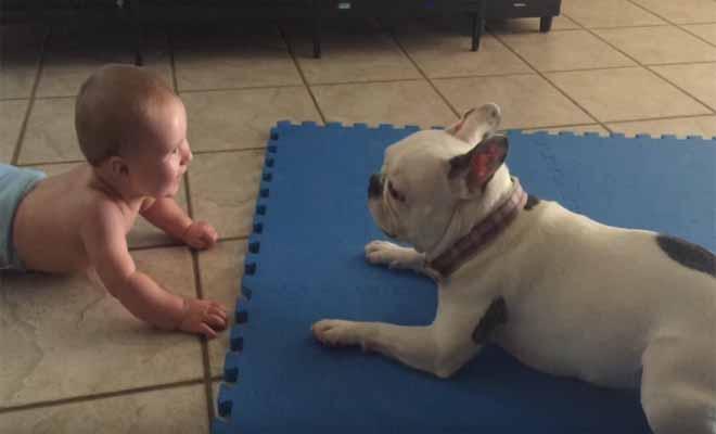 Θα σας φτιάξει το κέφι: Γαλλικό μπουλντόγκ τρελαίνεται από τη χαρά του κάθε φορά που το μωρό του χαμογελάει! [Βίντεο]