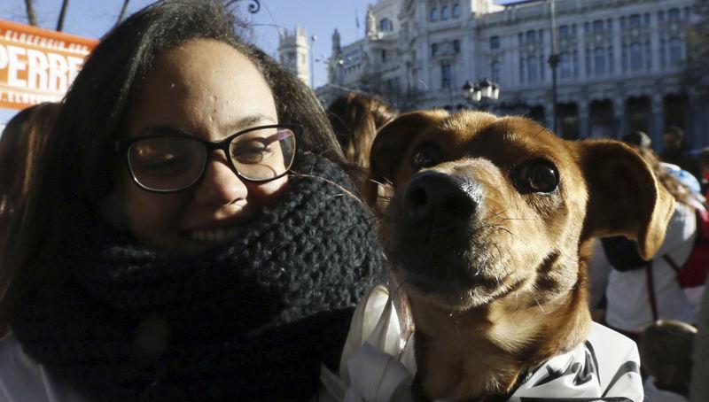 Σκύλοι με προσωπικότητα… ανθρώπων