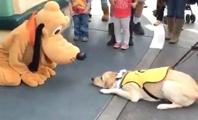 Πήρε τον σκύλο του και τον πήγε στην Ντίσνεϋλαντ. Δείτε την επική του αντίδραση μόλις συναντάει τον… Πλούτο! [Βίντεο]