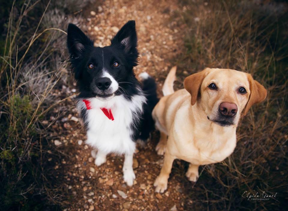 Δύο υπέροχα σκυλάκια γιόρτασαν τη Μέρα του Αγίου Βαλεντίνου (βίντεο)