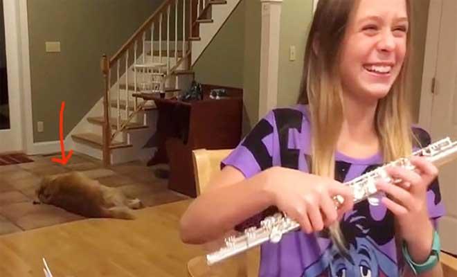 16χρονη κοπέλα προσπαθεί να μάθει φλάουτο. Δείτε όμως τί κάνει ο σκύλος στο βάθος και θα τρίβετε τα μάτια σας! [Βίντεο]