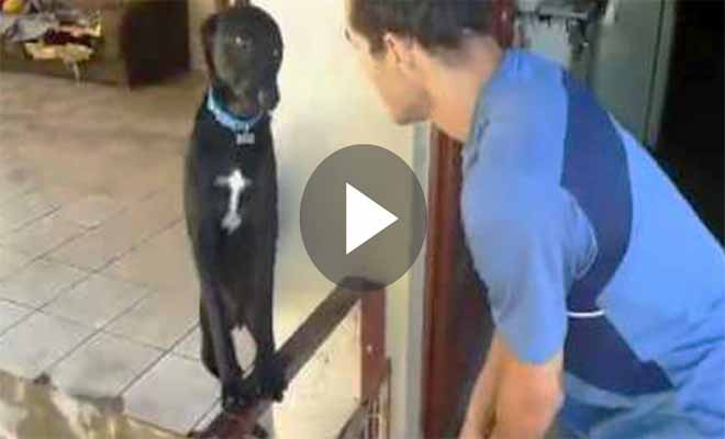 Ο σκύλος του έκανε κάτι πολύ κακό, αλλά μόλις το αφεντικό του πήγε να τον μαλώσει; Προσέξτε την φάτσούλα του και θα λιώσετε!