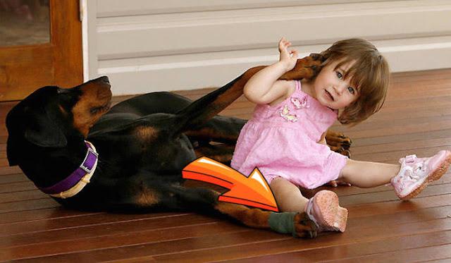 Σκύλος δάγκωσε 17 μηνών κοριτσάκι – Ο λόγος που το έκανε θα σας συγκινήσει