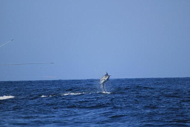 Η Σοκαριστική Στιγμή που ένα Τεράστιο Ψάρι βυθίζει ολόκληρο Αλιευτικό Σκάφος. Τρομοκρατημένοι οι Ψαράδες προσπαθούν να…