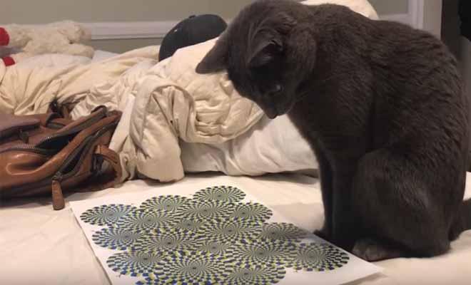 Δείτε πώς αντιδρά αυτή η γάτα σε μια οφθαλμαπάτη [Βίντεο]