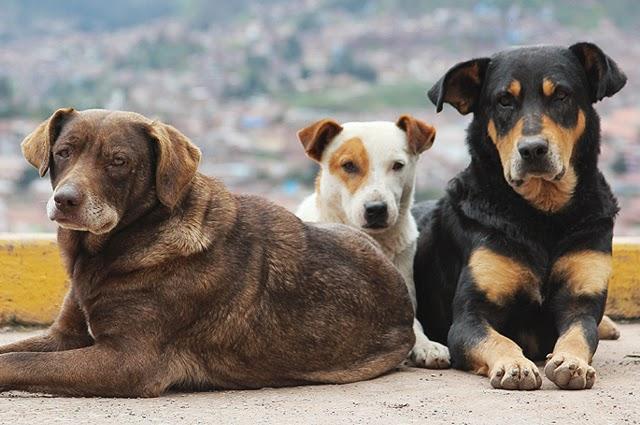 Μία υπέροχη πρωτοβουλία: Ο Δήμος Χανίων τοποθετεί ταΐστρες και ποτίστρες για τα αδέσποτα ζώα