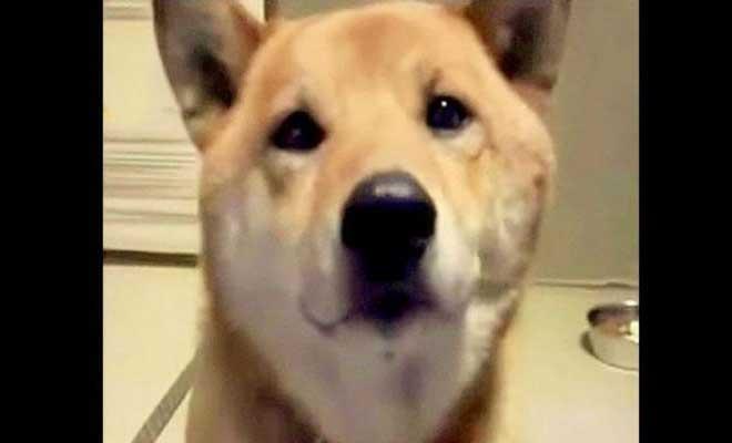 Γυναίκα ζητάει από τον σκύλο της να «γαβγίσει χαμηλόφωνα». Η αντίδραση του θα σας φτιάξει τη διάθεση! [Βίντεο]