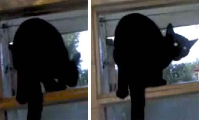 Γάτα πιάστηκε να γαβγίζει στο παράθυρο και το γύρισε αμέσως σε νιαούρισμα! [Βίντεο]