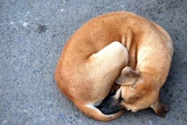 Το συγκινητικό γράμμα του σταρ του Χόλυγουντ για τον σκύλο του