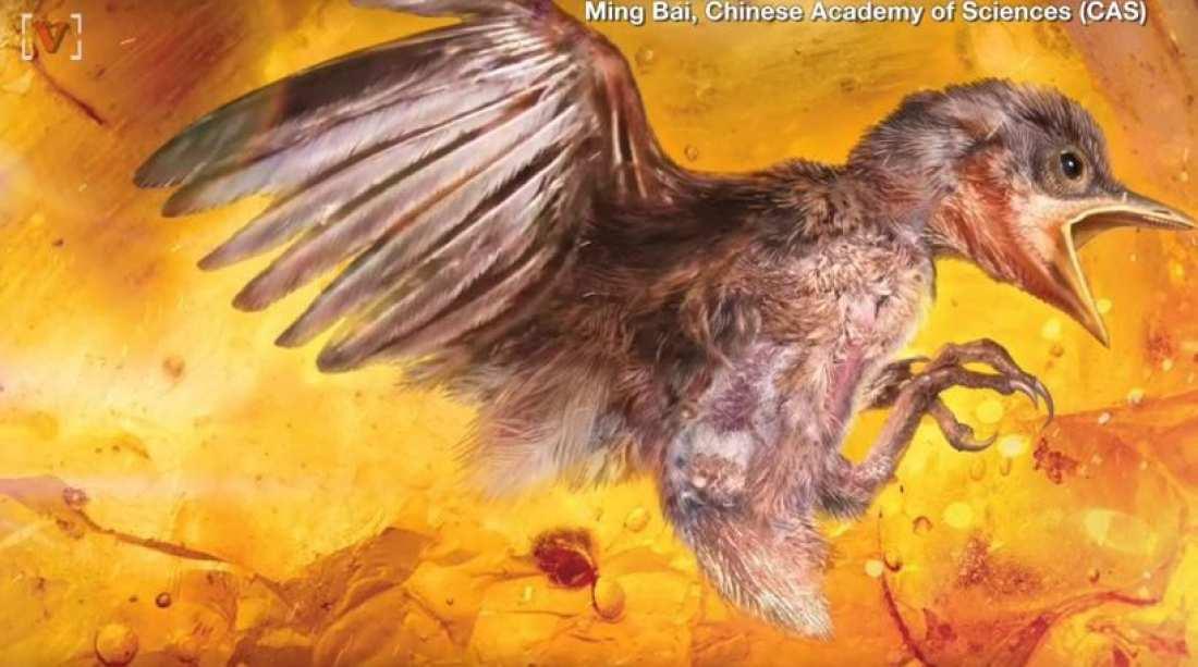 Κίνα: Πτηνό 99 εκατ. ετών βρέθηκε αυτούσιο [βίντεο]