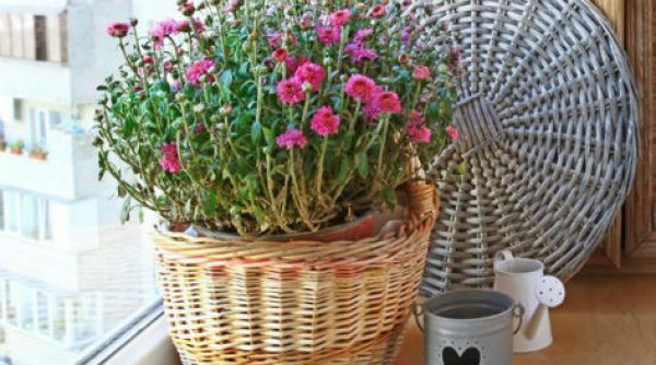Αυτό είναι το φυτό σύμβολο που έχουν στα σπίτια τους οι swingers για να αναγνωρίζονται (ΦΩΤΟ)