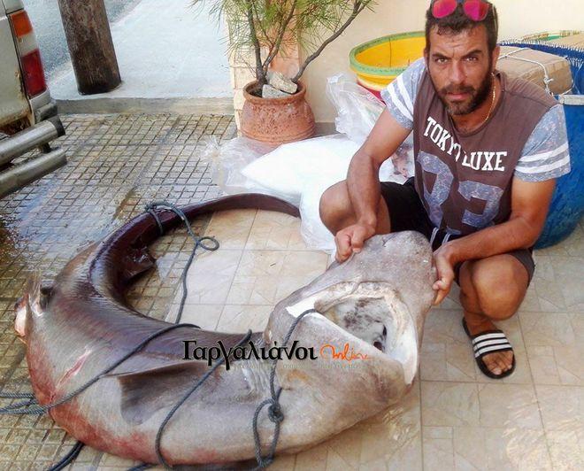 Φωτογραφία: Έπιασαν καρχαρία 180 κιλών στο λιμάνι της Μαραθόπολης