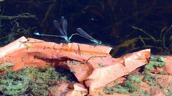 Το ΚΕΕΛΠΝΟ προειδοποιεί: Υπαρκτός ο κίνδυνος ελονοσίας