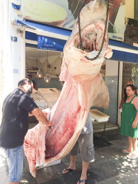 Ψαράδες έπιασαν καρχαρία 300 κιλών στην Κεφαλονιά