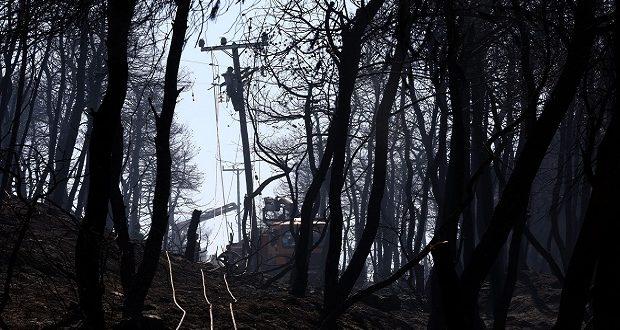 Τριάντα χρόνια θα χρειαστούν για την αποκατάσταση των καμένων εκτάσεων