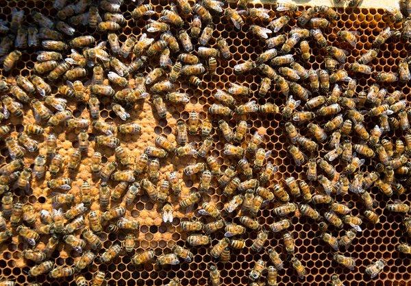 Κρήτη: Παραλίγο να χάσει τη ζωή του από τσιμπήματα σμήνους μελισσών