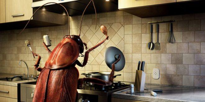 14 πράγματα που δεν θα θέλατε να ξέρατε για τις κατσαρίδες