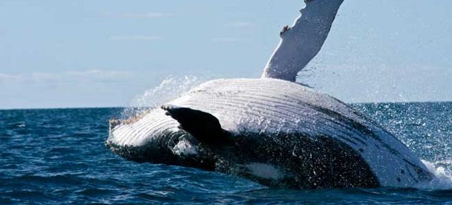 Το ξέρετε ότι ψεκάζεστε με εμετό φάλαινας; [photo]