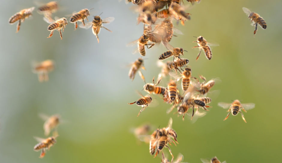 Κρητικός κινδύνεψε από επίθεση μελισσών – Δέχτηκε πάνω από 100 τσιμπήματα