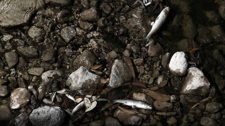 Γέμισε με νεκρά ψάρια το ρέμα της Πικροδάφνης