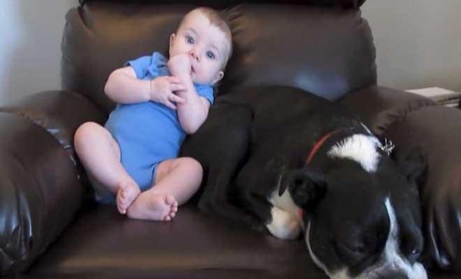 Μπέμπης τα κάνει πάνω του ενώ κάθεται δίπλα στον σκύλο. Προσέξτε τώρα ΠΩΣ αντιδράει ο σκύλος και θα κλάψετε στο γέλιο!