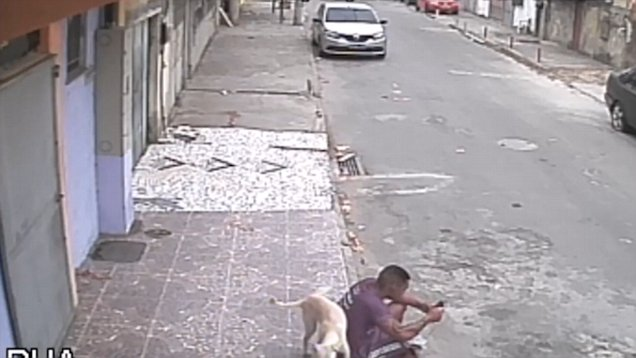 Σκύλος έκανε την ανάγκη του σε άνθρωπο που πέρασε για… κολονάκι! (βίντεο)