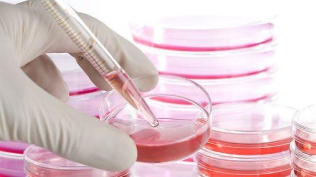 Διώξεις για την απάτη με τα βλαστοκύτταρα από την Εισαγγελία Πρωτοδικών