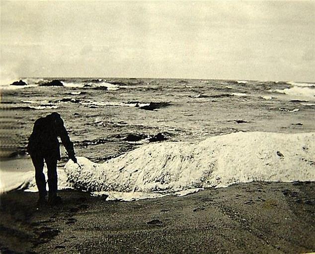 """Βρήκαν αυτό το """"Εξωγήινο"""" πλάσμα που ξεβράστηκε στην ακτή. Όταν κατάλαβαν τι είναι, έπαθαν το σοκ της ζωής τους"""