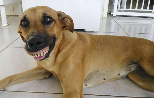 Άνδρας φωνάζει τον σκύλο του που σκάβει στην αυλή και μόλις ανοίγει το στόμα του δεν μπορεί να σταματήσει να γελάει