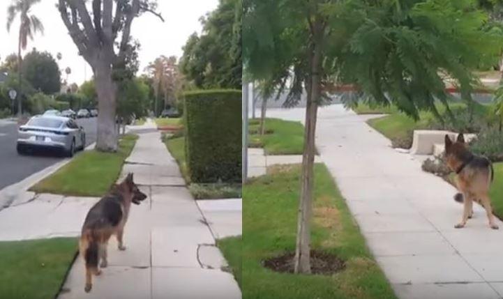 Σκύλος φρικάρει μόλις συνειδητοποιήσει ότι το αφεντικό του δεν βρίσκεται πια πίσω του