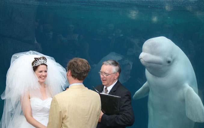 25+1 ξεκαρδιστικά photobombings που συνέβησαν σε φωτογραφίες γάμων