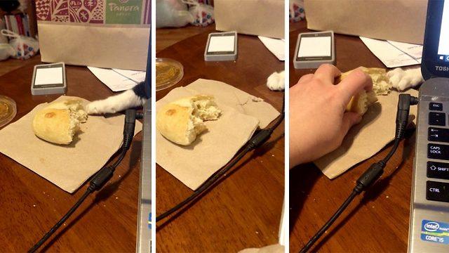 Η προσπάθεια αυτής της γάτας να κλέψει το ψωμί από το τραπέζι θα σου φτιάξει τη μέρα [βίντεο]
