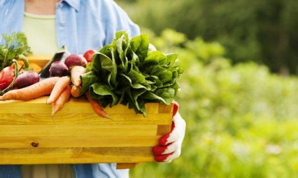 Τα βιολογικά τρόφιμα είναι τελικά πιο θρεπτικά; Τι δείχνουν οι έρευνες