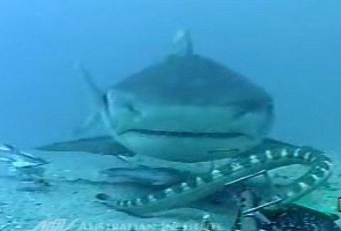 Εντυπωσιακό: Η μάχη ενός φιδιού με καρχαρία στο βυθό της θάλασσας [video]