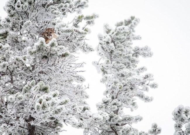 30 φωτογραφίες του National Geographic που δείχνουν το μεγαλείο της φύσης